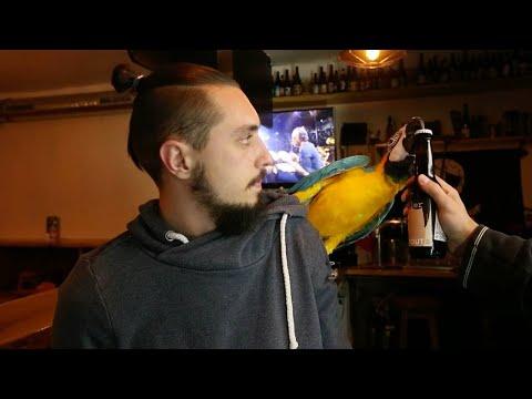 Пернатый помощник бармена