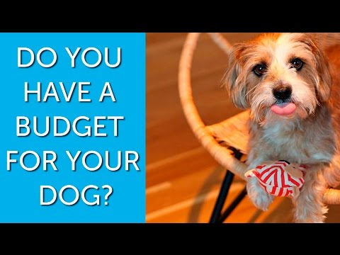How Much Do Serious Dog Lovers Spend on Their Pets?