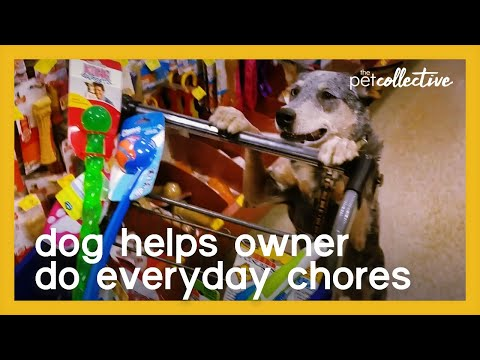 Well-Trained Dog Helps Owner Do Everyday Chores
