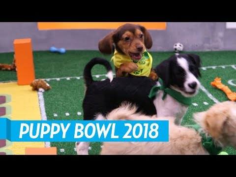 Backstage at the 2018 Puppy Bowl