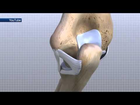 Медицинская справка: суставы и их функция