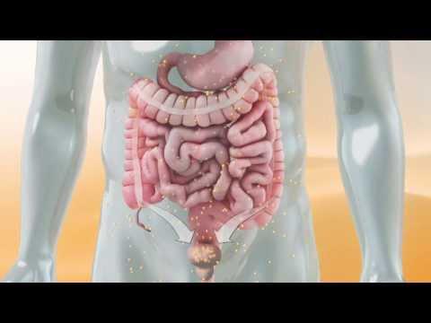 Vesikel und Prostata