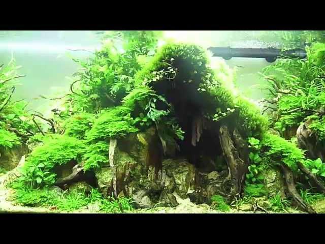 L'aquarium de Julien Voultoury IAPLC 2014 ADA Takashi Amano - Technique Aquascaping