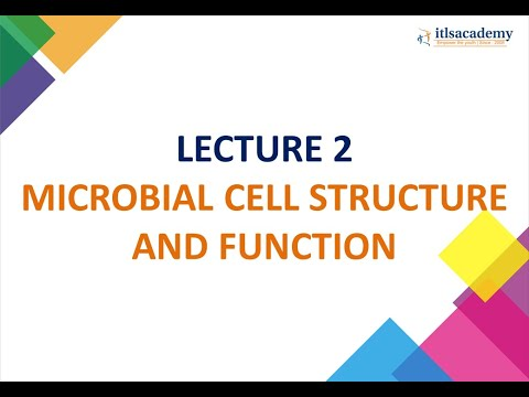 MICROBIAL CELL STRUCTURE AND FUNCTION