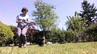 Puppy Strong Start - Obedience Training and Social