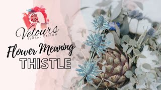 Thistle Flower Meaning