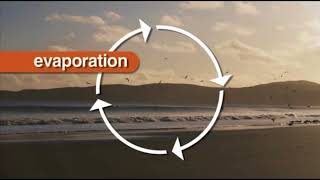 Cycles of Matter in an Ecosystem Water & Carbon Cycle