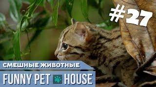 СМЕШНЫЕ ЖИВОТНЫЕ И ПИТОМЦЫ #27 ЯНВАРЬ 2019 [Funny Pet House] Смешные животные