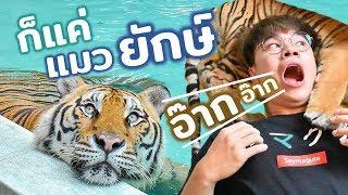 ก็แค่เสือตัวใหญ่ จะกลัวอะไร...!? กลัวโดนกินไง!!