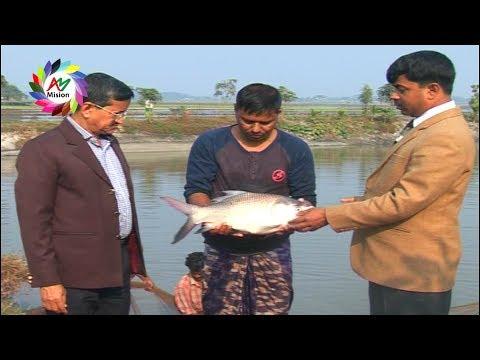 বাবুল চৌধুরী মাছ চাষ করে ৪০ লক্ষ টাকা আয় | Babul Fish Chas | Dewan Siraj | Mati O Manush