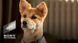 Meet Sandy the Dog - Annie