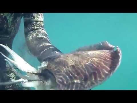 Pesca video di un crucian in linea
