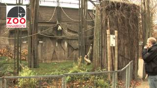 preview picture of video 'Zeitrafferrundgang Zoo Osnabrück'