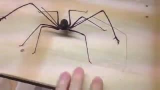 Бойцового паука воспитал менеджер рекламной компании в Таганроге