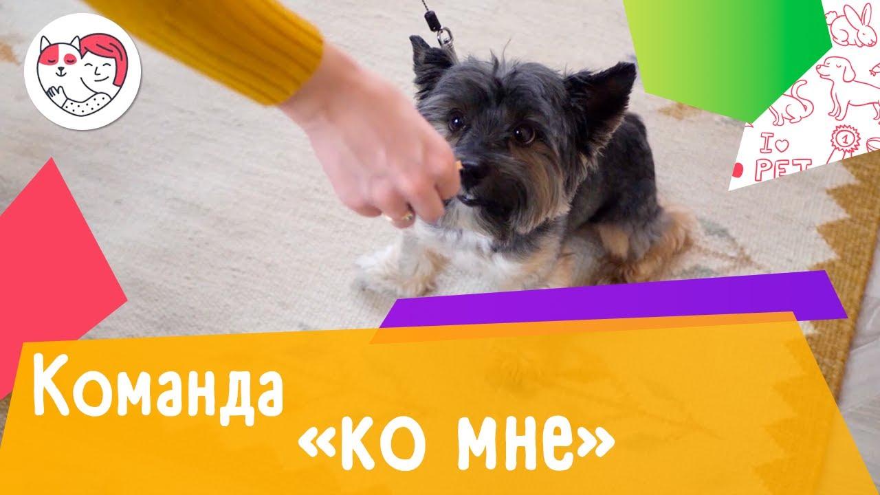 Как обучить собаку команде «Ко мне»: видеоинструкция