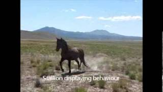 Wild Horse Behaviour In Utah