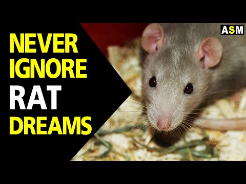 What does Rat dream meaning | Dream interpretation | Dreaming of rats |