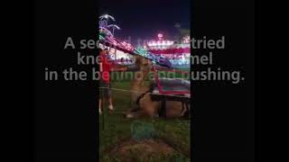 Camel Abuse in Tennessee