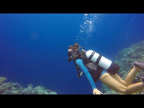 Scuba Diving Wakatobi INDONESIA on a Yacht Episode 70 (Sailing Catalpa)