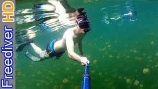 Freediving Palau | Jellyfish Lake | Rock Islands