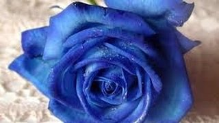 Blue By David Anderson Venice Beach Musician