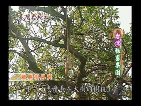 臺灣農民力第22集
