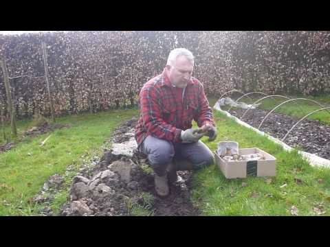 , title : 'Gardening - How to plant potatoes successfully in clay soil