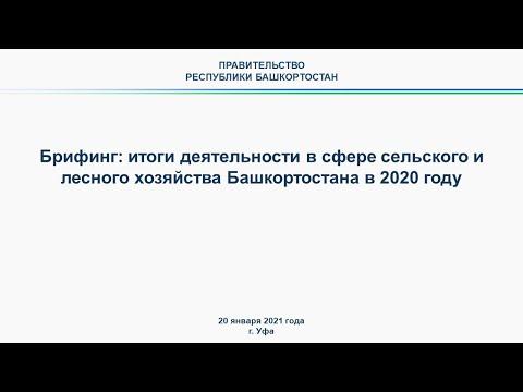 Брифинг: итоги деятельности в сфере сельского и лесного хозяйства Башкортостана в 2020 году
