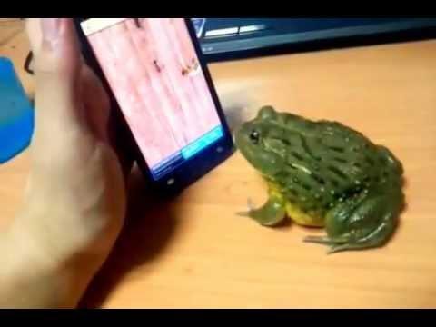 Frog eats a Troll finger