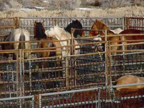Wo man auf dem amurischen Gebiet den Pferdeerreger kaufen kann