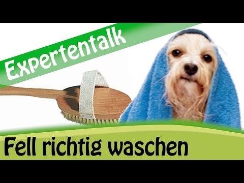 Hund waschen: Tipps zur optimalen Fellpflege für Ihre Hunderasse? - Expertentalk