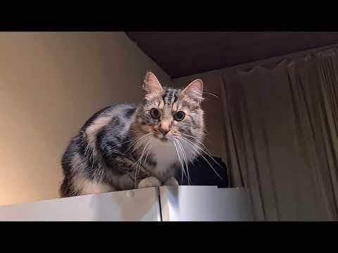 Willy auf dem Schrank
