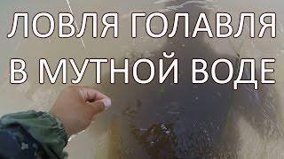 На что ловить голавля в мутной воде