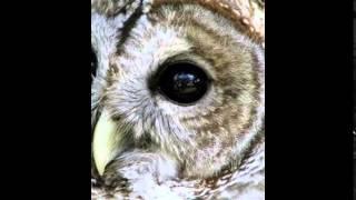 """Dej Loaf - """"Blood"""" (instrumental WHOOK+free D/L)"""