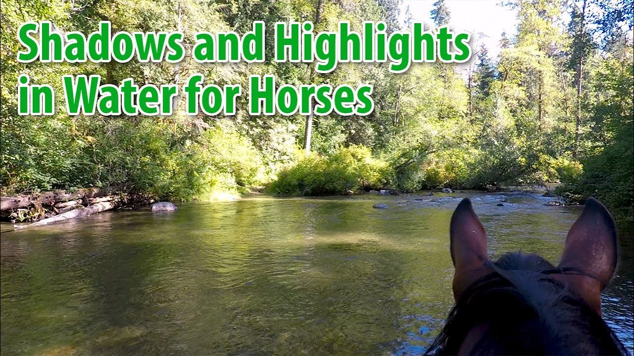 Being Aware of Shadows and Bright Spots in Water for Horses