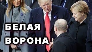 Путин прилетел в Париж клянчить встречу с Трампом