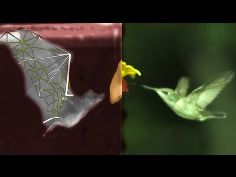 Watching Bats Fly In Slow Motion Reveals Biological Badassery