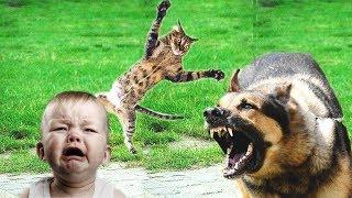 10 случаев когда коты кошки спасли жизнь человеку (Героические коты) - Смешные кошки МатроскинТВ