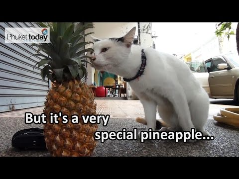 How much would you pay for a Phuket Pineapple?