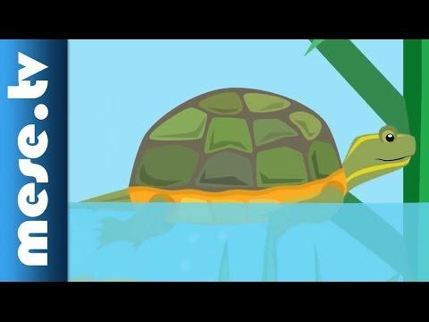 Gryllus Vilmos : A teknősbéka (gyerekdal, mese, Félnóta sorozat) letöltés