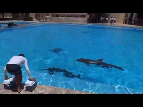 Barcelo Maya Palace Dolphinarium