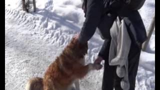 Hund - Freundschaft in den Bergen