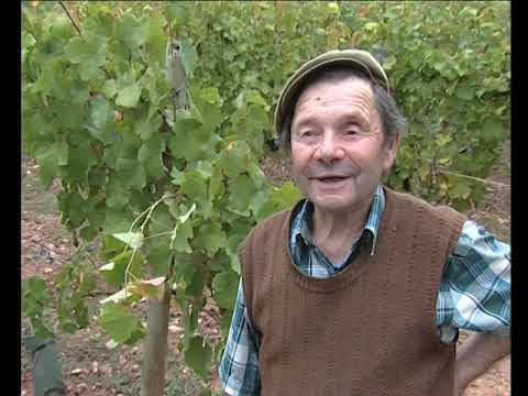 Plantar la vinha
