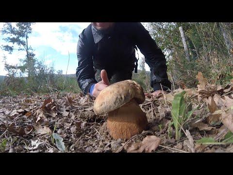 Che trattare una gola a un fungo schiumoso