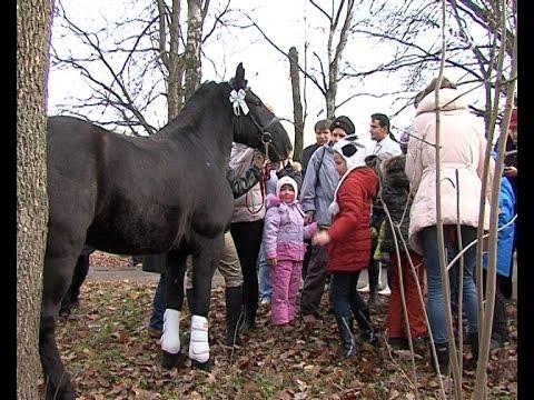 Администрация Химок подарила КСК «Равные возможности» лошадь для занятий иппотерапией