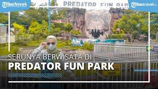 Berkunjung Predator Fun Park di Malang, Simak Harga Tiket Masuk Terbaru 2021