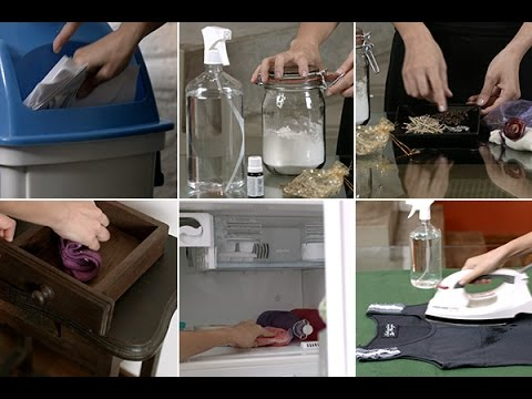 Acabe com as traças em casa de forma natural e sem venenos