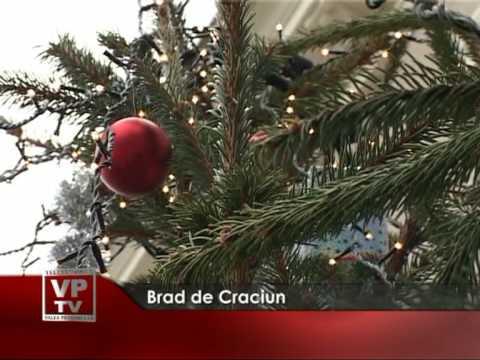 Brad de Craciun