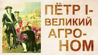 Амарант – пища богов. И что еще запретил Петр-1 на Руси