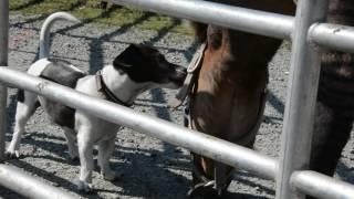 Hunde- und Pferdeliebe